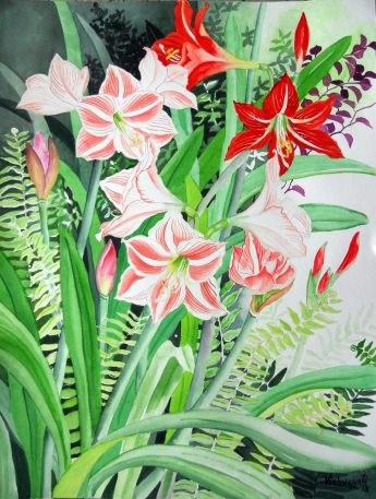 Amaryllis and Hippeastrum