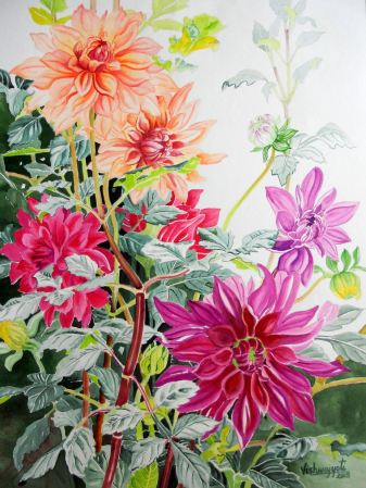 Colorful Dahlias 1