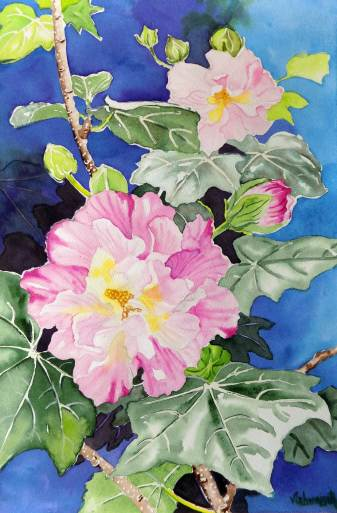 Hibiscus Mutabilis