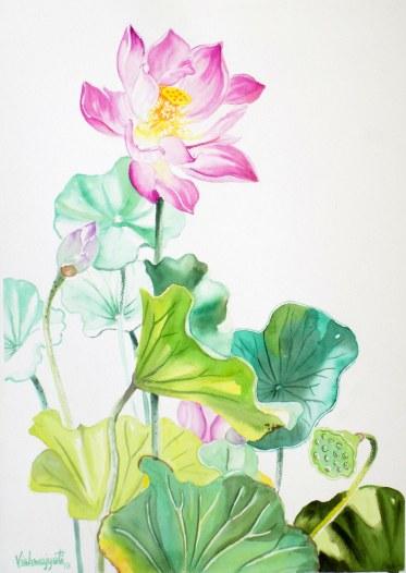 Chinese Lotus 1