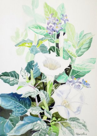 Datura and Calotropis