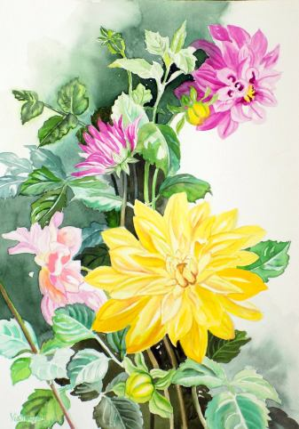 Yellow and Mauve Dahlias