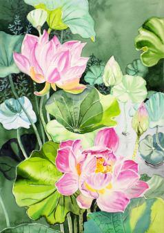 Chinese Lotus 2