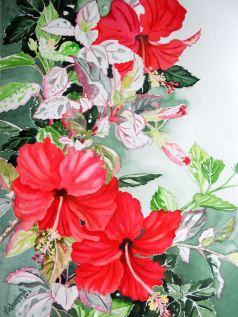 Hibiscus variegated 2